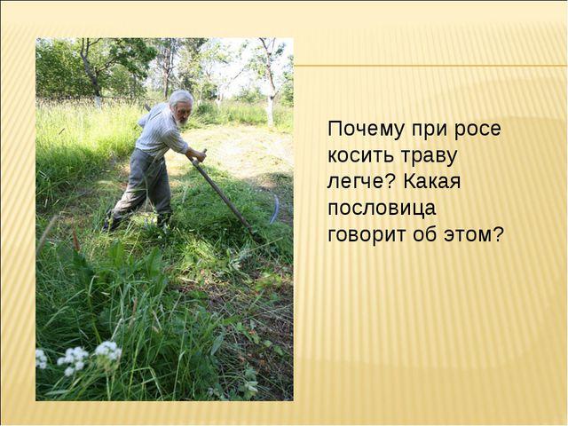 Почему при росе косить траву легче? Какая пословица говорит об этом?