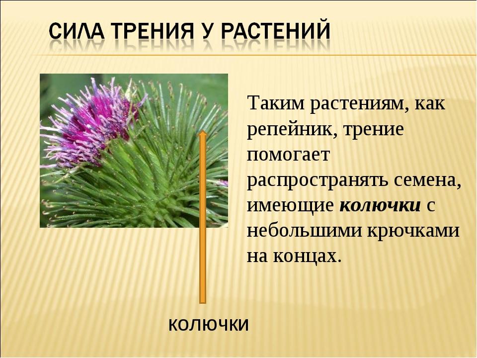 Таким растениям, как репейник, трение помогает распространять семена, имеющие...