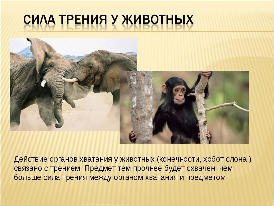 Действие органов хватания у животных (конечности, хобот слона ) связано с тре...