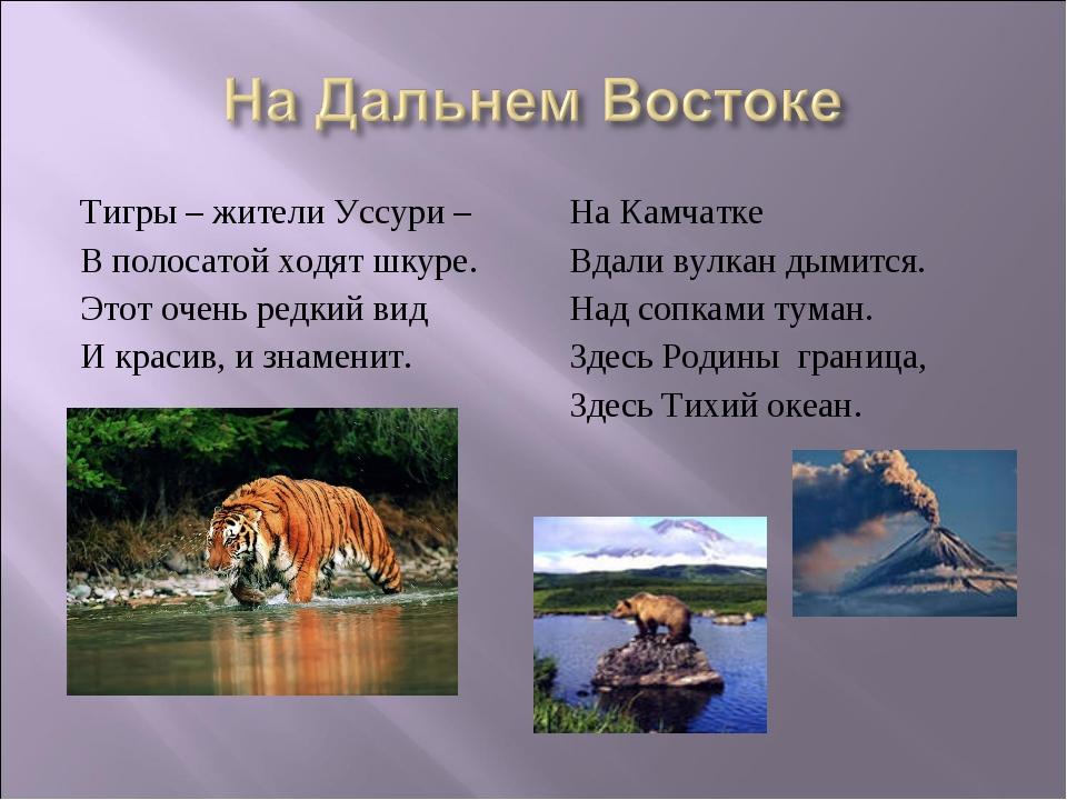 Тигры – жители Уссури – В полосатой ходят шкуре. Этот очень редкий вид И крас...