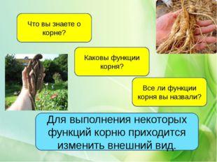 Что вы знаете о корне? Каковы функции корня? Все ли функции корня вы назвали?