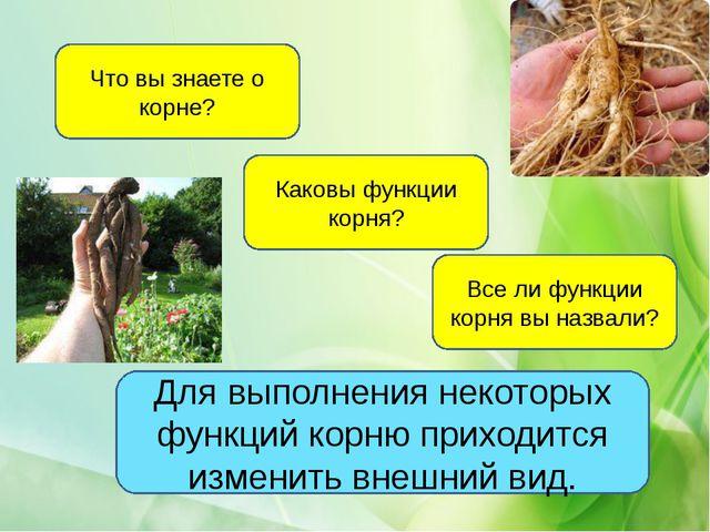 Что вы знаете о корне? Каковы функции корня? Все ли функции корня вы назвали?...