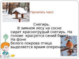 Прочитать текст. Снегирь. В зимнем лесу на сосне сидит красногрудый снегирь.