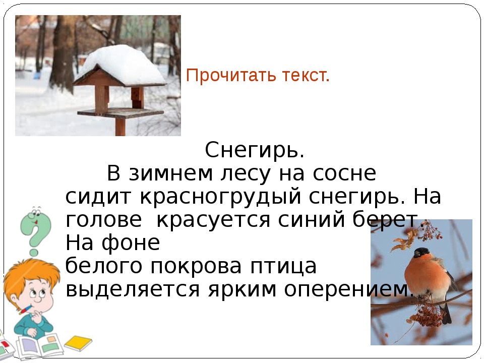 Прочитать текст. Снегирь. В зимнем лесу на сосне сидит красногрудый снегирь....