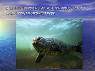 В зимние и весенние месяцы, примерно полгода, котики живут в открытом море.