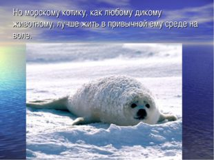 Но морскому котику, как любому дикому животному, лучше жить в привычной ему с