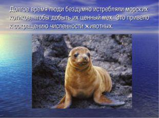 Долгое время люди бездумно истребляли морских котиков, чтобы добыть их ценный