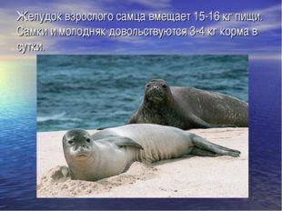 Желудок взрослого самца вмещает 15-16 кг пищи. Самки и молодняк довольствуютс