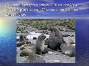 Максимальная длина самца – 220 см, вес 320 кг. Самка в среднем весит 70 кг пр