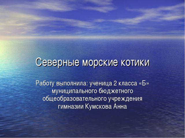 Северные морские котики Работу выполнила: ученица 2 класса «Б» муниципального...