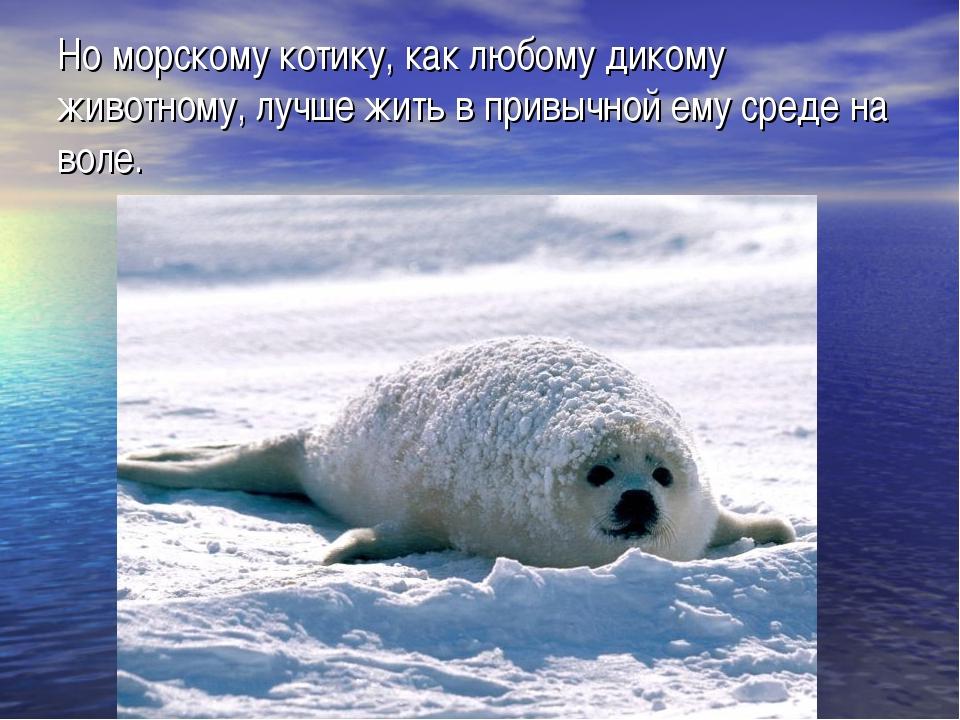 Но морскому котику, как любому дикому животному, лучше жить в привычной ему с...