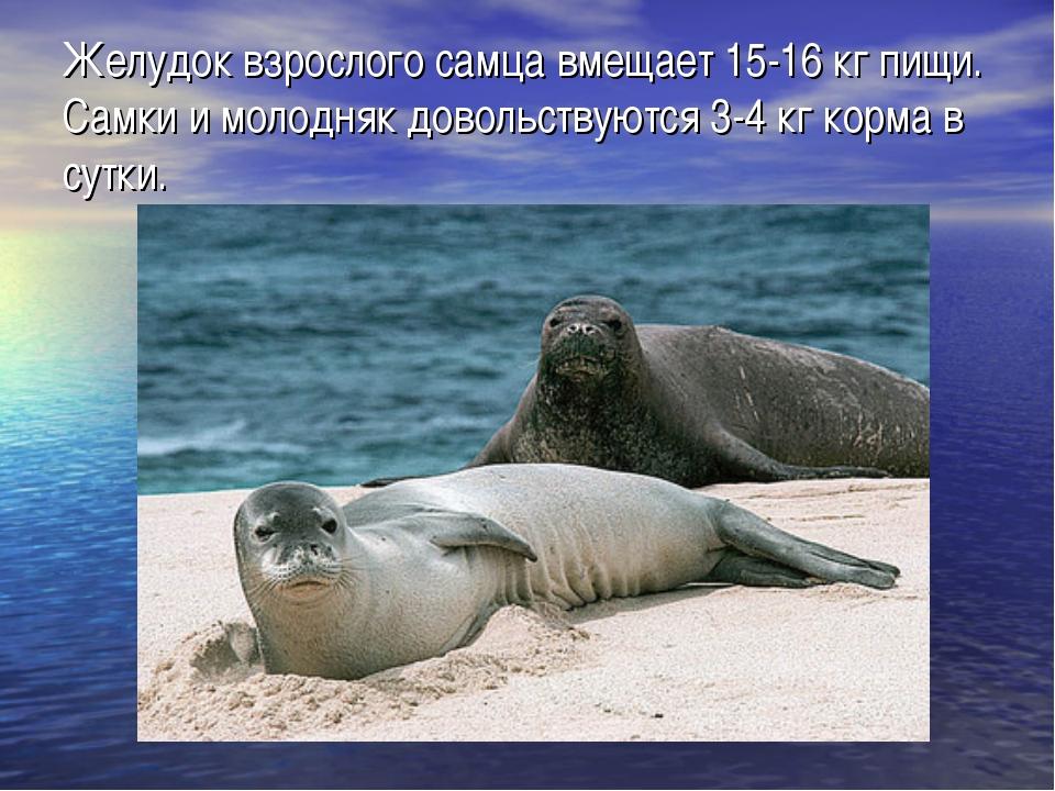 Желудок взрослого самца вмещает 15-16 кг пищи. Самки и молодняк довольствуютс...