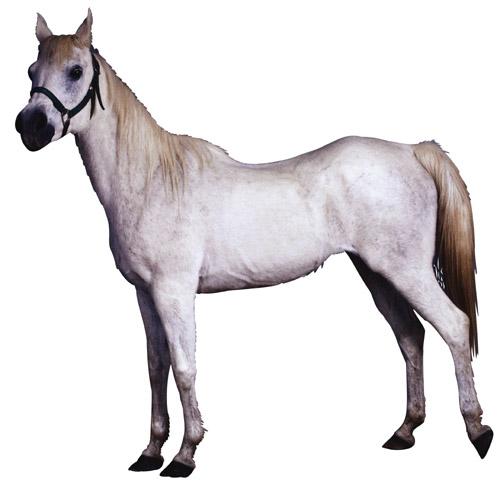 Скачать Лошадь картинка для детей 5