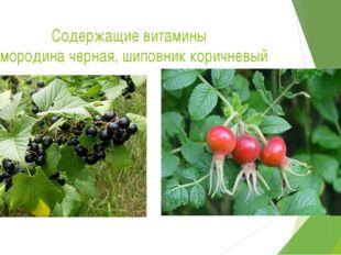 Содержащие витамины Смородина черная, шиповник коричневый