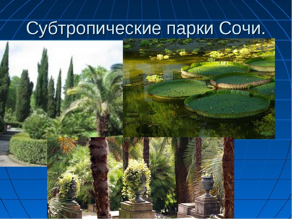 Субтропические парки Сочи.