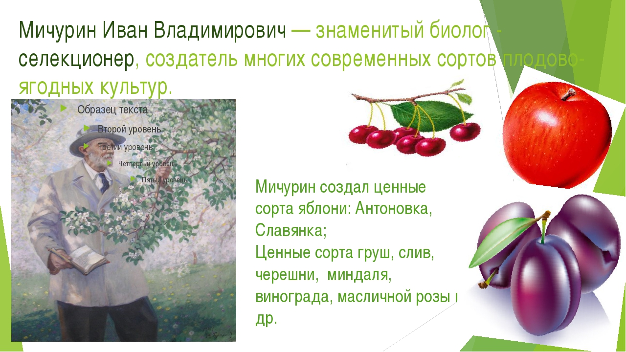 Мичурин Иван Владимирович — знаменитый биолог - селекционер, создатель многих...