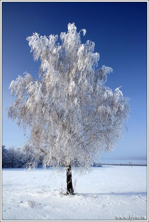 http://www.stihi.ru/pics/2013/12/09/7773.jpg