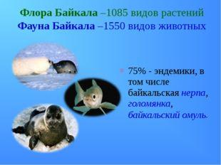 Флора Байкала –1085 видов растений Фауна Байкала –1550 видов животных 75% - э