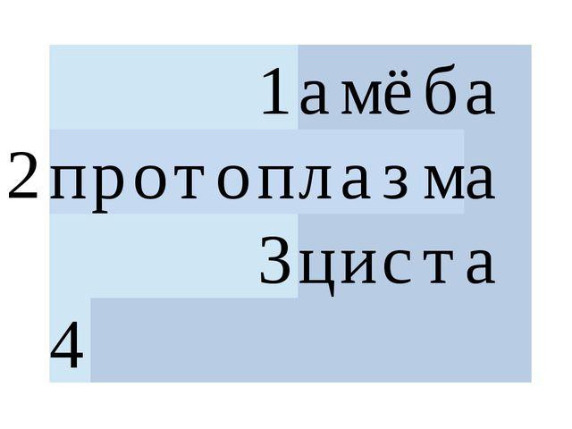 2 1 а м ё б а  п р о т о п л а з м а  3 ц и с т а  4