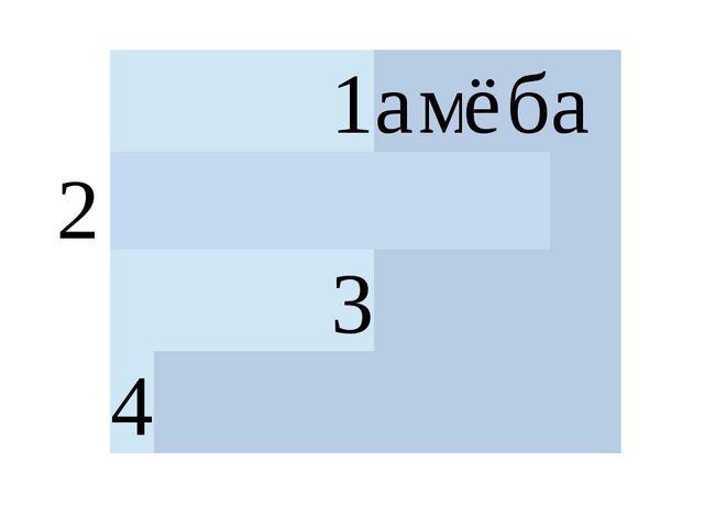 2 1 а м ё б а   3  4