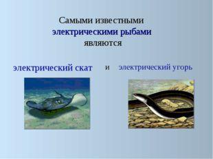 Самыми известными электрическими рыбами являются электрический скат электрич