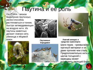 Паутина и ее роль Паук -серебрянка Паутинные бородавки Ловчий аппарат и средс