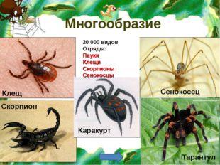 Многообразие Каракурт 20 000 видов Отряды: Пауки Клещи Скорпионы Сенокосцы