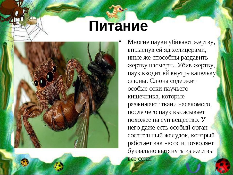 Питание Многие пауки убивают жертву, впрыснув ей яд хелицерами, иные же спосо...