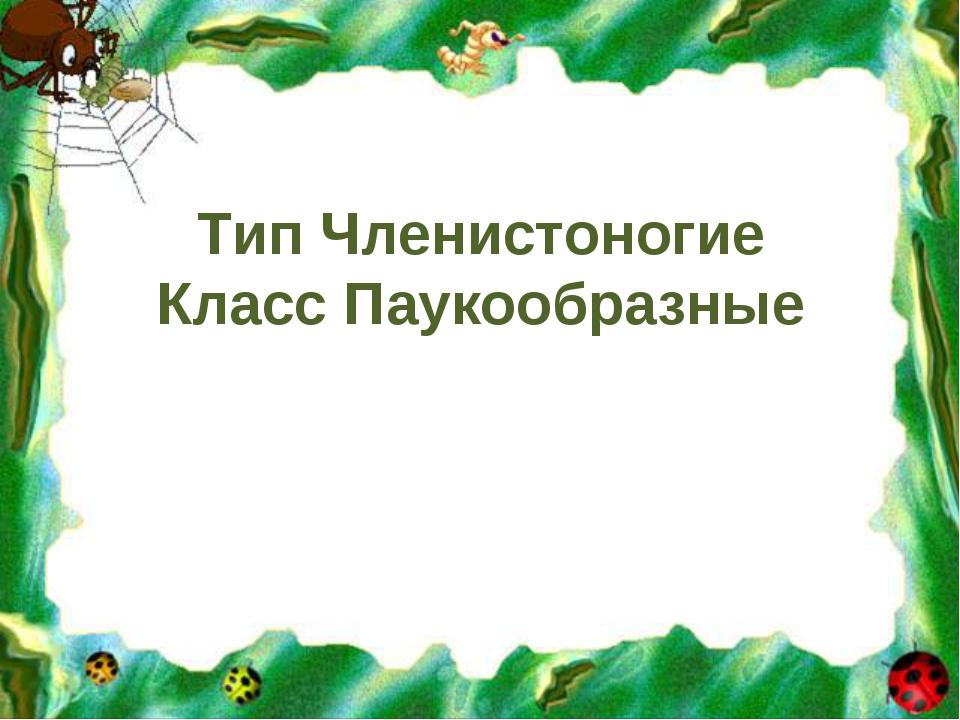 Тип Членистоногие Класс Паукообразные