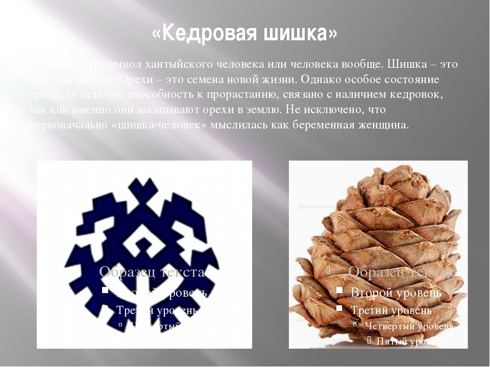 «Кедровая шишка» Шишка – это символ хантыйского человека или человека вообще....