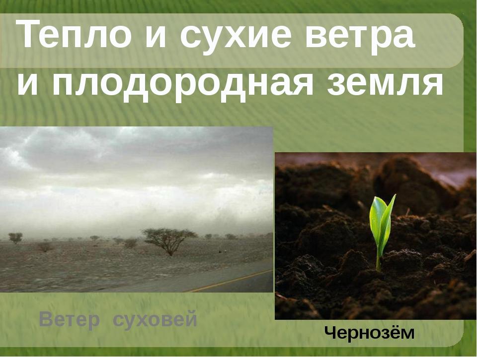Тепло и сухие ветра и плодородная земля Чернозём Ветер суховей