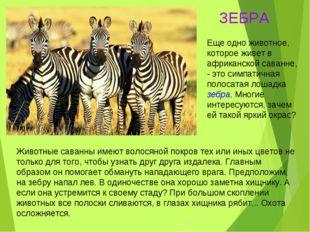 Животные саванны имеют волосяной покров тех или иных цветов не только для тог