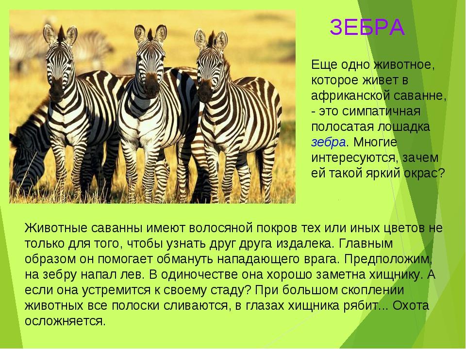 Животные саванны имеют волосяной покров тех или иных цветов не только для тог...