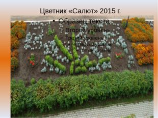 Цветник «Салют» 2015 г.