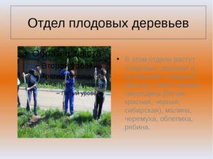 Отдел плодовых деревьев В этом отделе растут плодовые деревья и кустарники, а