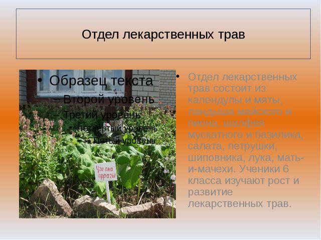 Отдел лекарственных трав Отдел лекарственных трав состоит из календулы и мят...