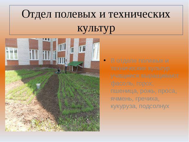 Отдел полевых и технических культур В отделе полевых и технических культур уч...