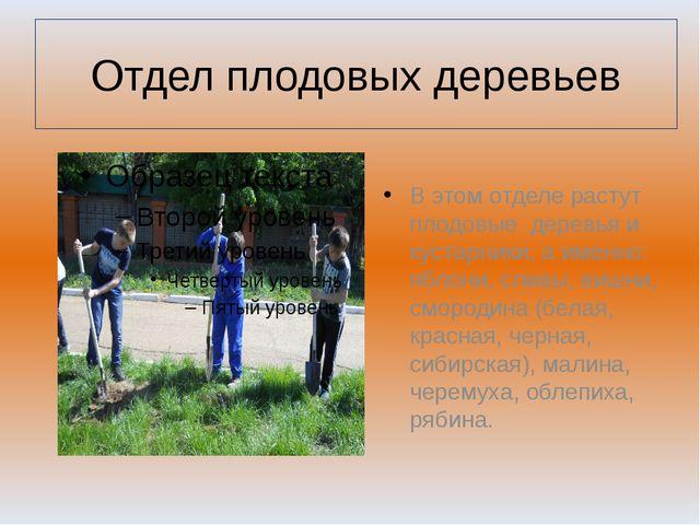 Отдел плодовых деревьев В этом отделе растут плодовые деревья и кустарники, а...