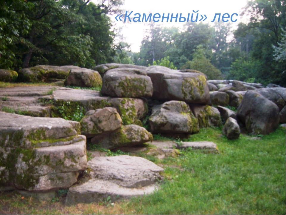 «Каменный» лес