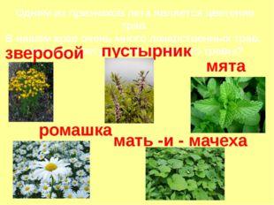 Одним из признаков лета является цветение трав. В нашем крае очень много лека