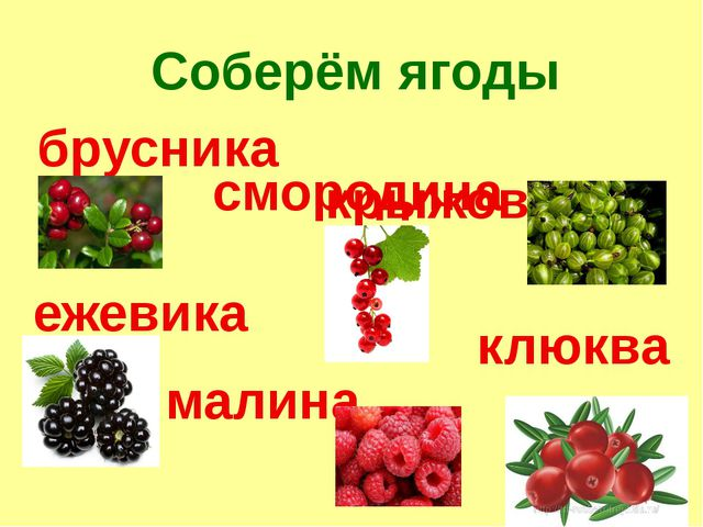 Соберём ягоды брусника крыжовник смородина клюква малина ежевика