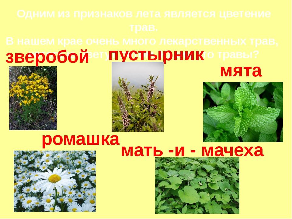 Одним из признаков лета является цветение трав. В нашем крае очень много лека...