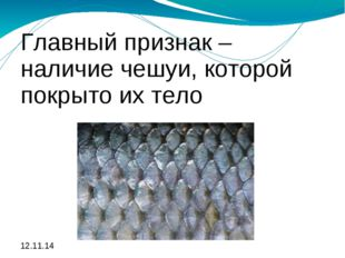 Главный признак – наличие чешуи, которой покрыто их тело Главный признак – на
