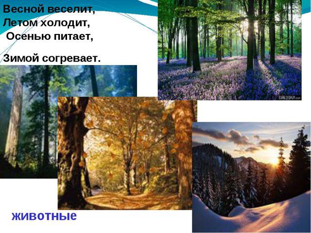 Весной веселит, Летом холодит, Осенью питает, Зимой согревает. Весной весели...