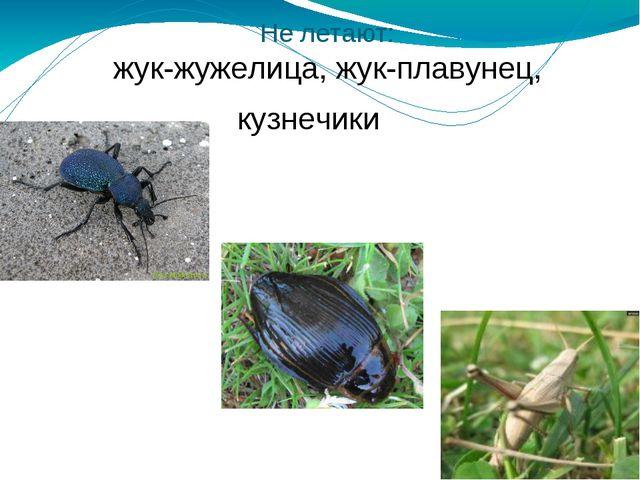Не летают: жук-жужелица, жук-плавунец, кузнечики Не летают: жук-жужелица, жук...