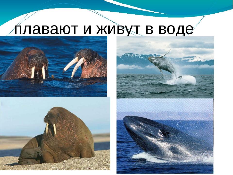 плавают и живут в воде плавают и живут в воде