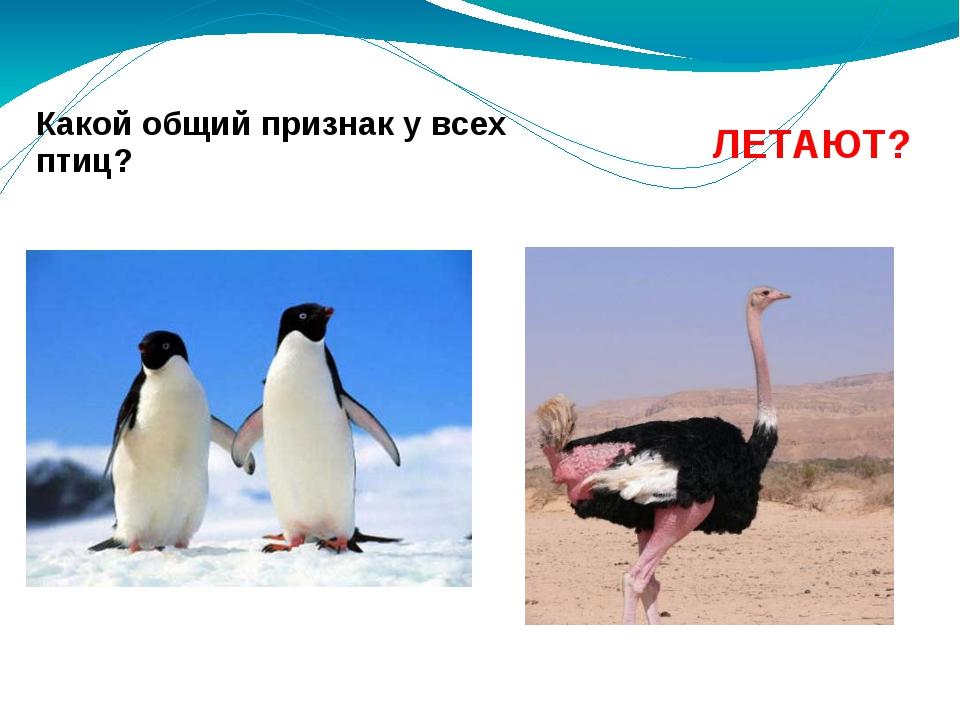 Какой общий признак у всех птиц? ЛЕТАЮТ?