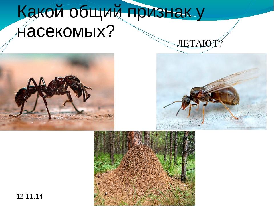 Какой общий признак у насекомых? ЛЕТАЮТ? Какой общий признак у насекомых? ЛЕТ...
