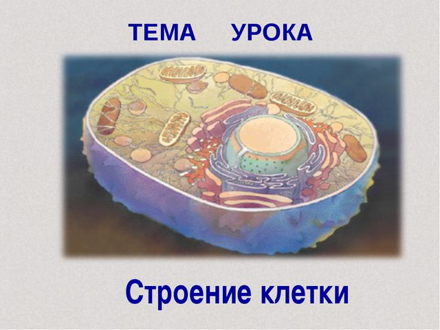 ТЕМА УРОКА Строение клетки