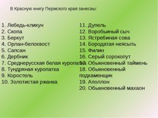В Красную книгу Пермского края занесеы: 1. Лебедь-кликун 2. Скопа 3. Беркут